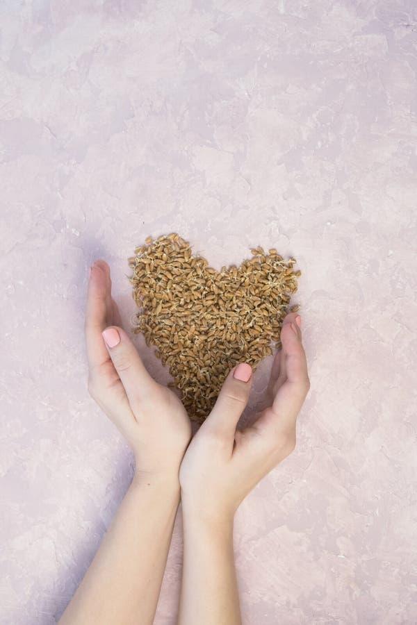 Ontsproten tarwe in vorm van hart met vrouwenhanden op een lichte achtergrond gestemd royalty-vrije stock foto's
