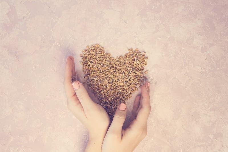 Ontsproten tarwe in vorm van hart met vrouwenhanden op een lichte achtergrond gestemd stock afbeelding