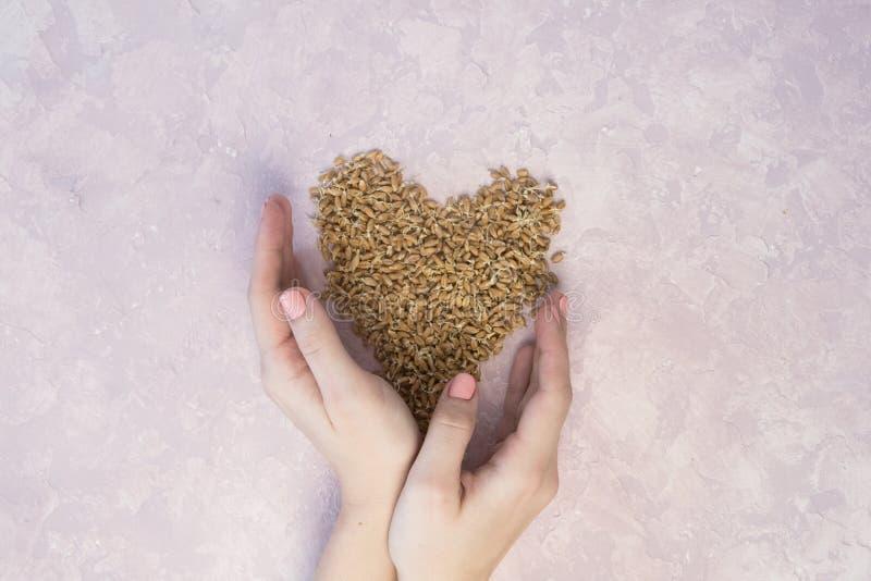 Ontsproten tarwe in vorm van hart met vrouwenhanden op een lichte achtergrond gestemd stock foto's