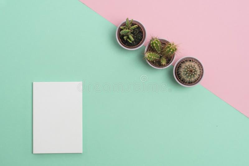 Ontvankelijke Bedrijfs zachte roze Als achtergrond en groen met drie cactussen en wit boekje royalty-vrije stock foto's