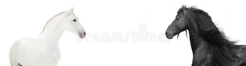 Ontwerp van websitekopbal met zwart-witte hors royalty-vrije stock fotografie