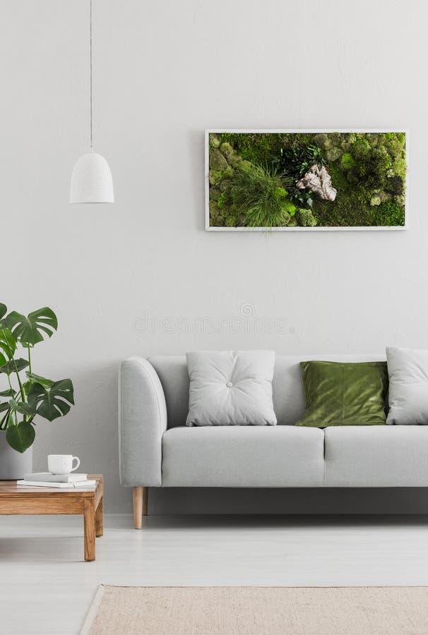 Ontworpen, groene mostuin op een witte muur in een in woonkamerbinnenland met een elegante, grijze bank en een houten lijst Echte stock foto