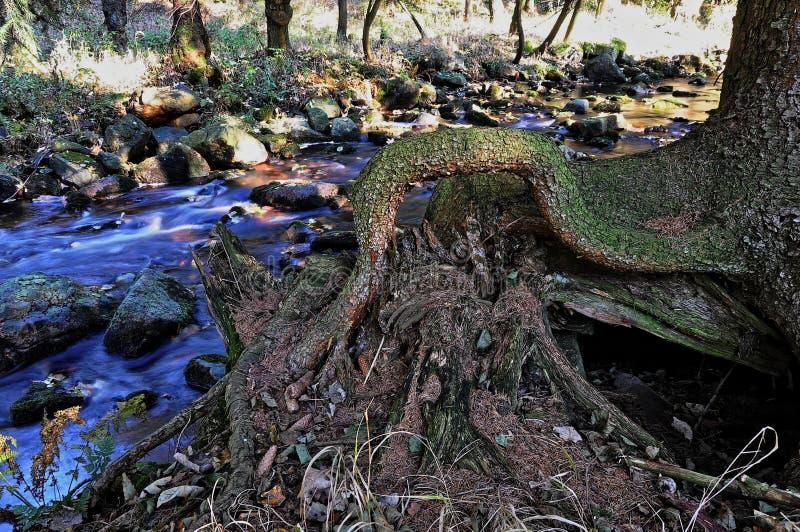 Ontwortelde boom dichtbij de stroom stock foto