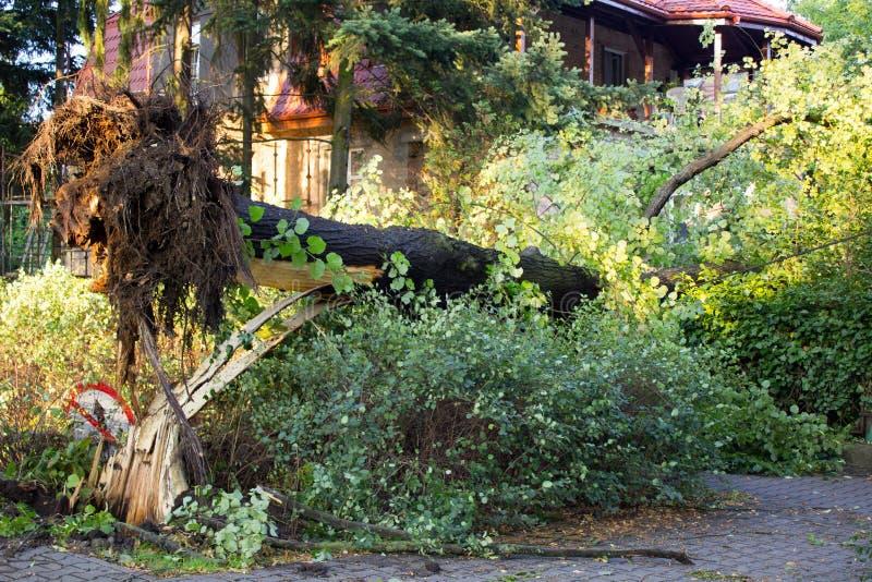 Ontwortelde boom na onweer stock foto