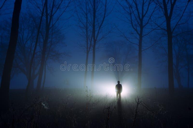 Ontzagwekkend silhouet nevelig bos bij dageraad royalty-vrije stock afbeelding