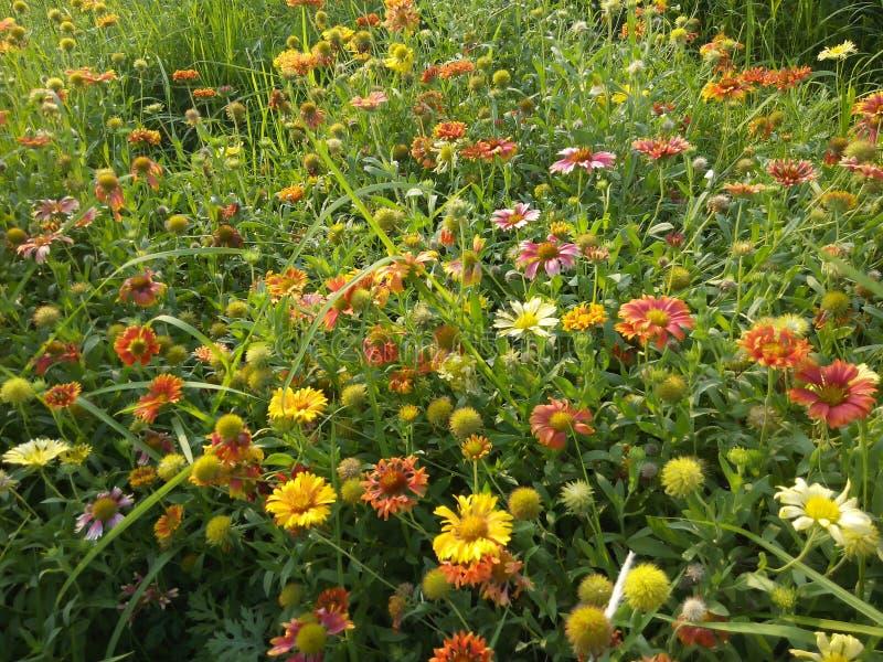 Ontzagwekkende bloemen royalty-vrije stock fotografie