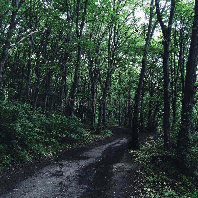 Onverkend bos stock afbeeldingen