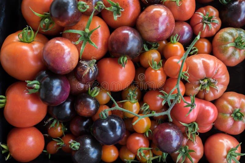 Onvolmaakt inlands erfgoed en hybride tomaten stock afbeelding