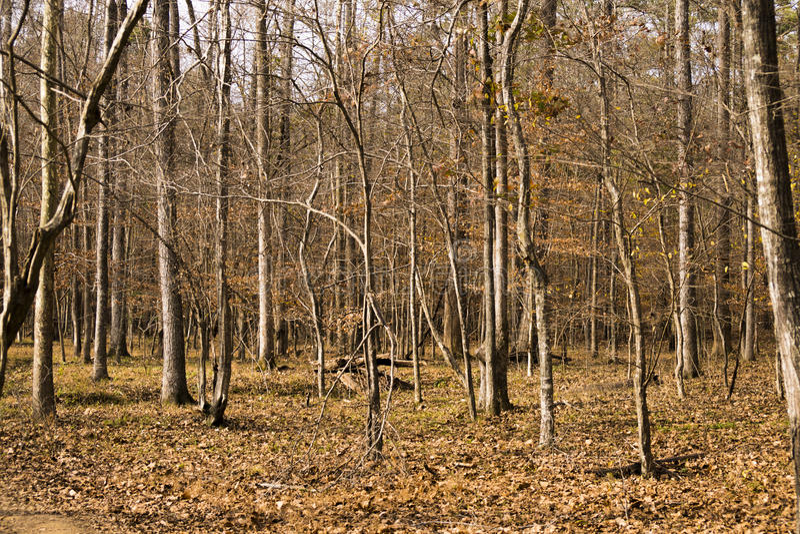 Onvruchtbare bomen royalty-vrije stock fotografie