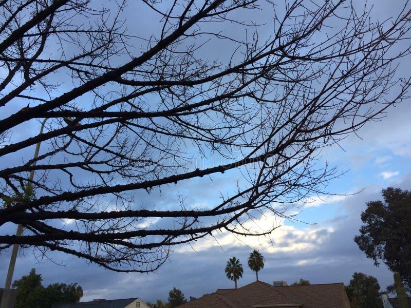 Onvruchtbare bomen stock foto