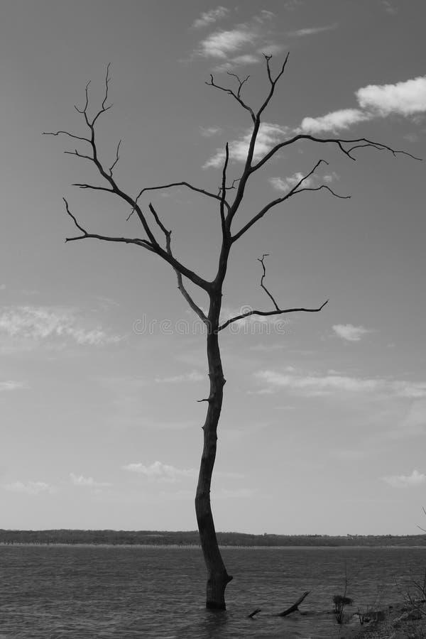 Onvruchtbare boom in meer stock fotografie