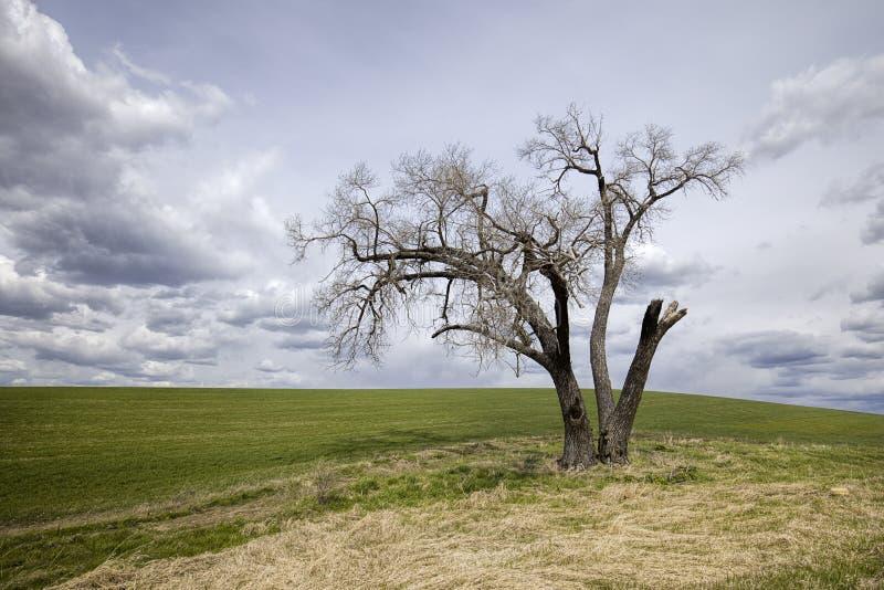 Onvruchtbare boom op een landbouwbedrijfgebied royalty-vrije stock afbeelding