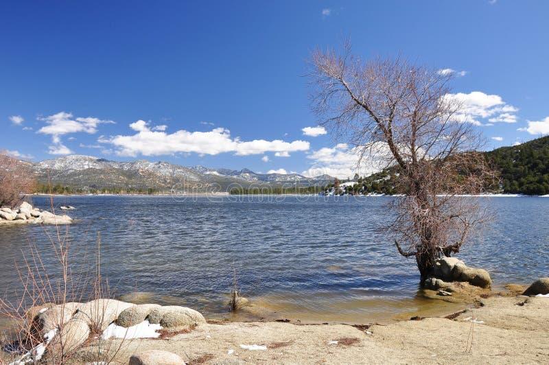 Onvruchtbare lakeshoreboom stock foto