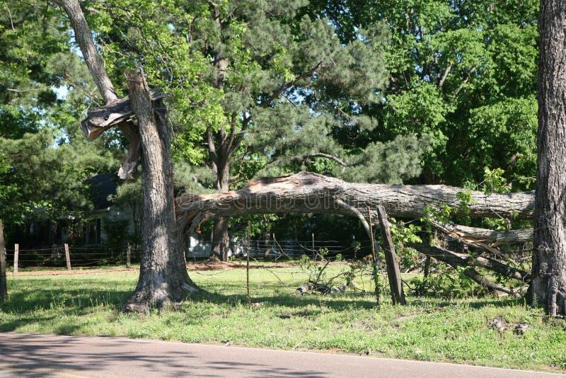 Onweer beschadigde boom stock foto's