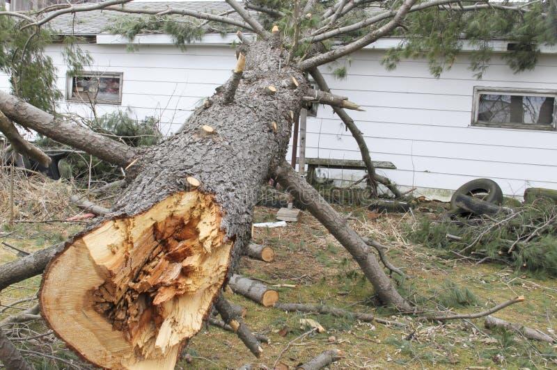 Onweer beschadigde boom op een huis stock afbeeldingen