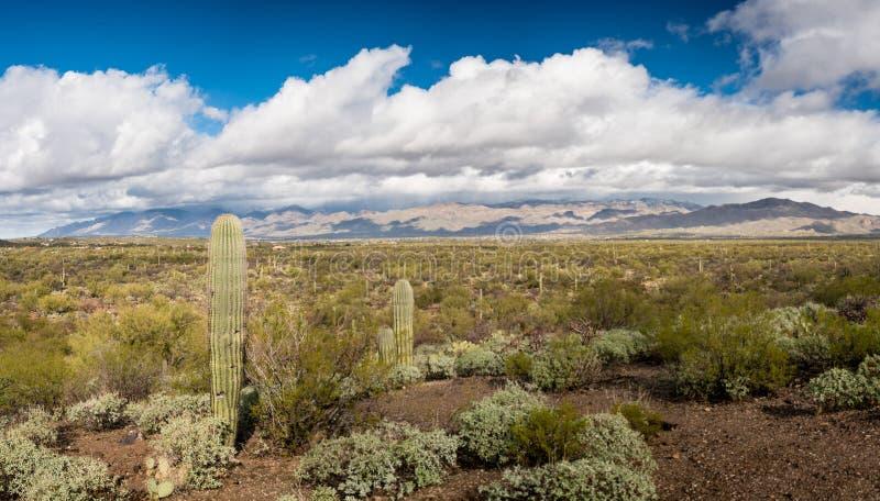 Onweer door Saguaro National Park Tucson stock foto