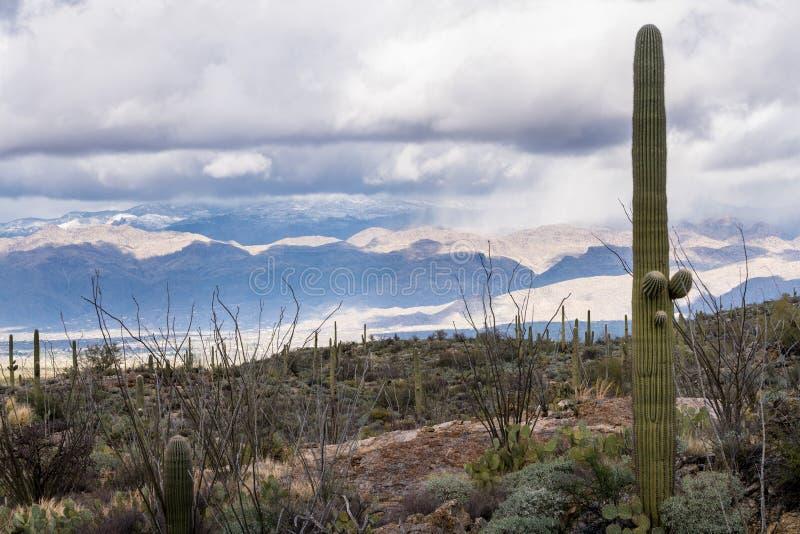 Onweer door Saguaro National Park Tucson royalty-vrije stock foto