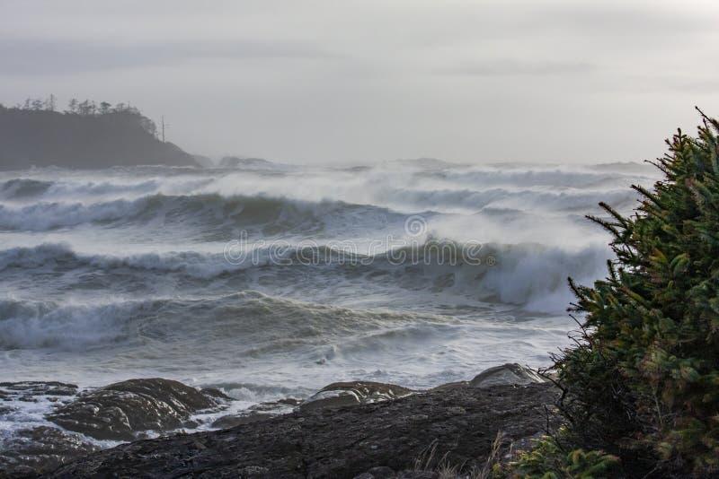Onweer het letten op bij Cox-Baai Tofino, BC stock foto