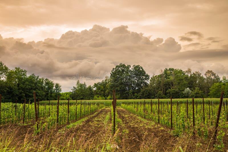 Onweer op het gebied van Italië stock afbeeldingen