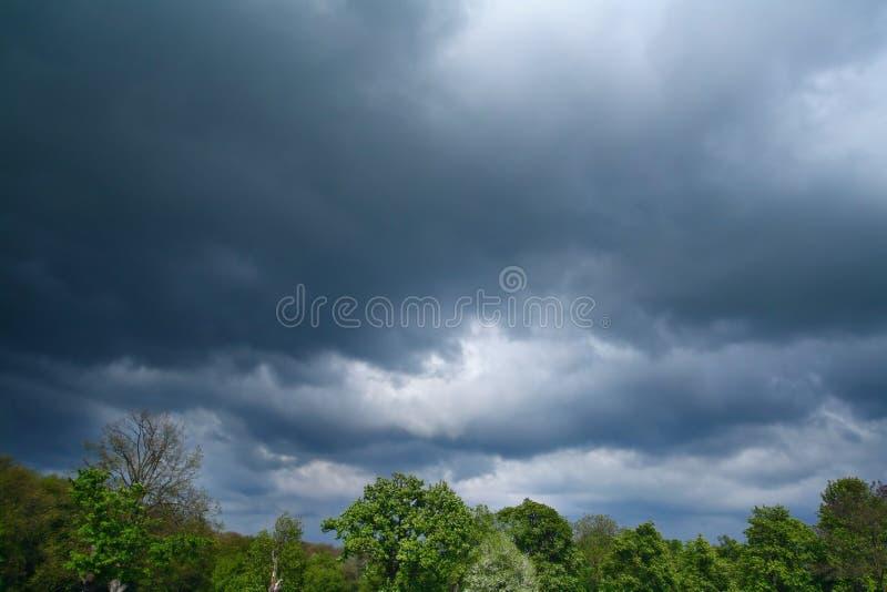 Onweer over bomen royalty-vrije stock foto's