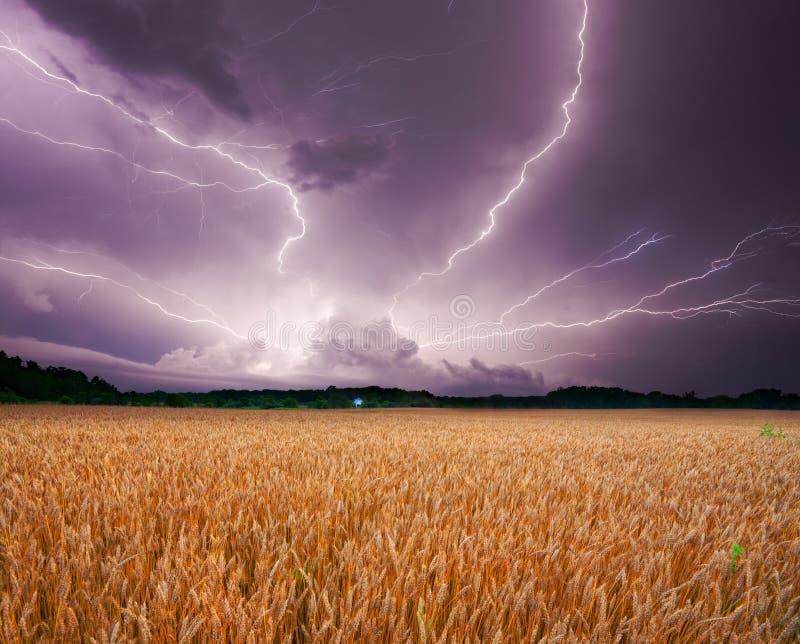 Onweer over tarwe
