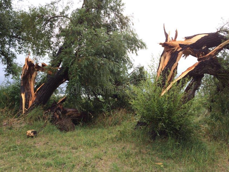 Onweersschade gebroken bomen royalty-vrije stock fotografie