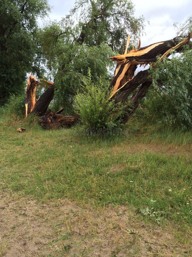 Onweersschade gebroken bomen stock afbeeldingen