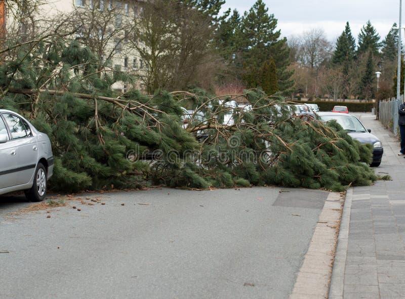 Onweersschade, gevallen boom stock fotografie