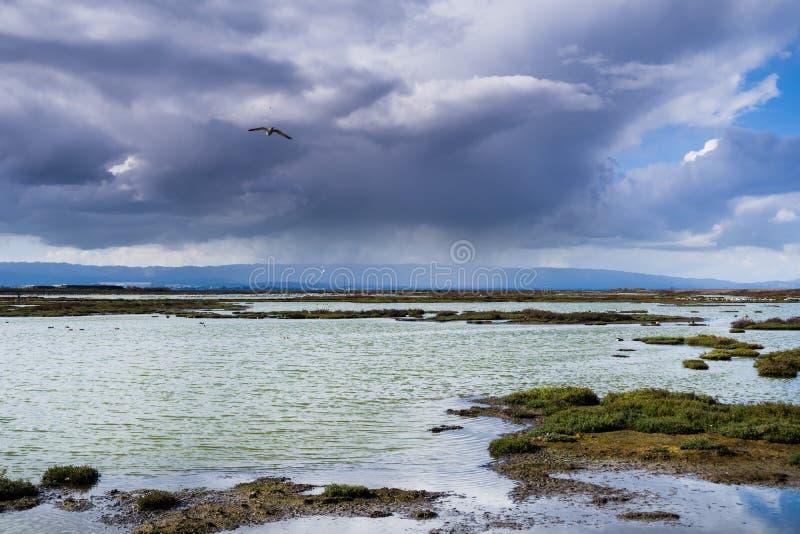 Onweerswolken die Alviso-moeras, San Jose naderen royalty-vrije stock foto's