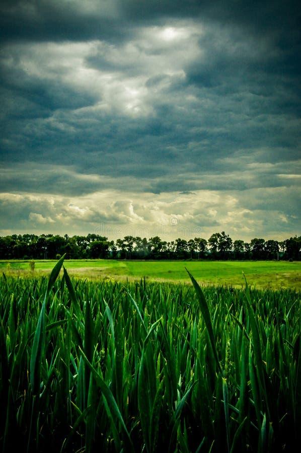 Onweerswolken die op het groene gebied naderbij komen royalty-vrije stock foto