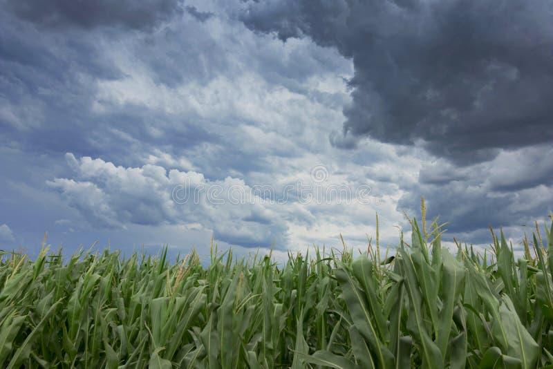 Onweerswolken over graangebieden royalty-vrije stock afbeelding