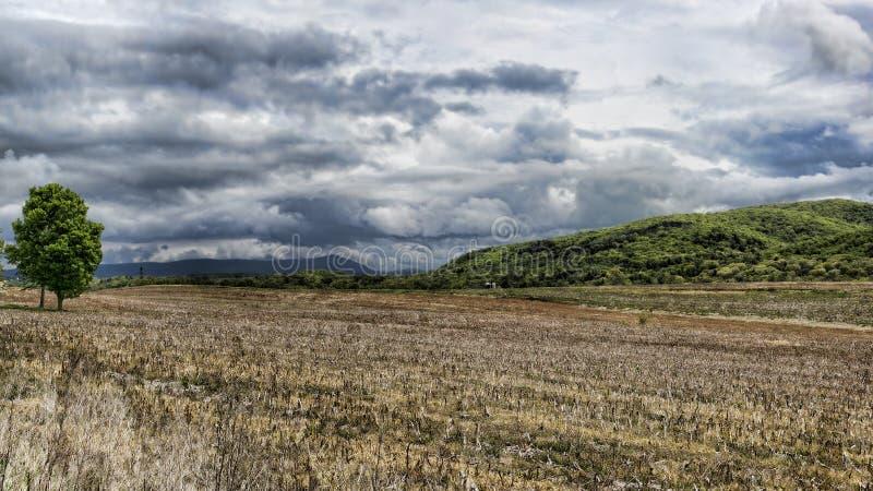 Onweerswolken van cornfield worden gezien die stock afbeeldingen