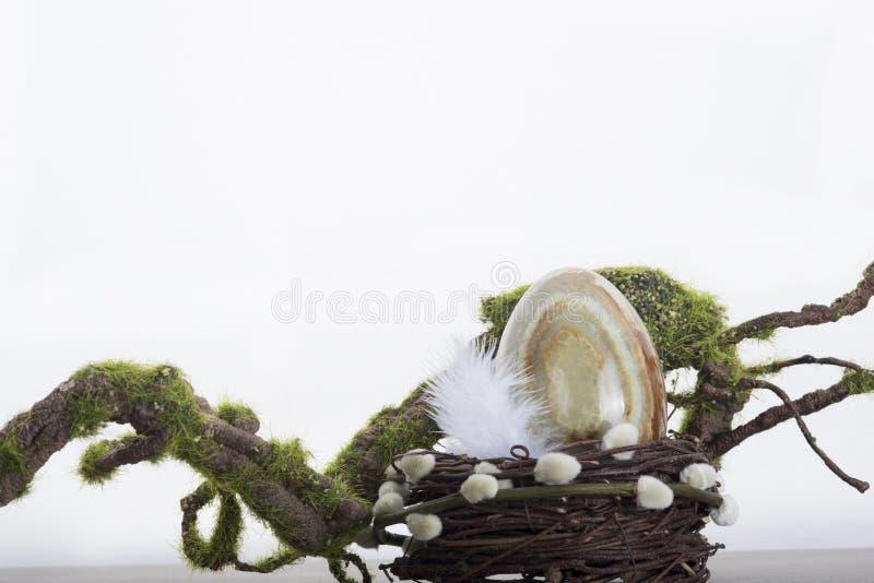 Onyxei in nest royalty-vrije stock fotografie