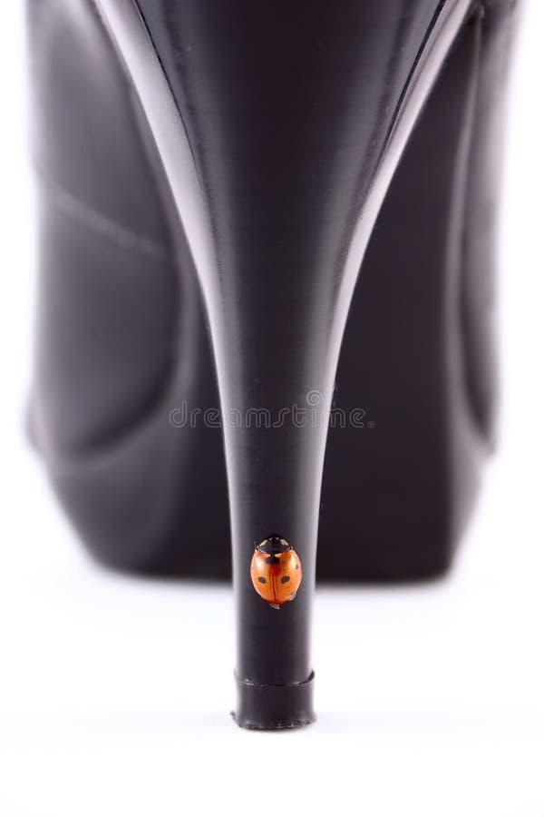 Onzelieveheersbeestje op de de schoenenclose-up van de hielenvrouwen stock foto