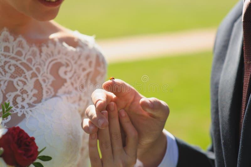 Onzelieveheersbeestje op vinger van bruidegom stock foto's