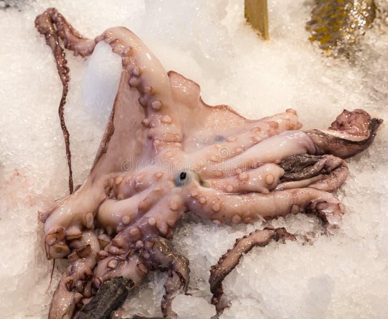 Oog op Octopus royalty-vrije stock afbeeldingen