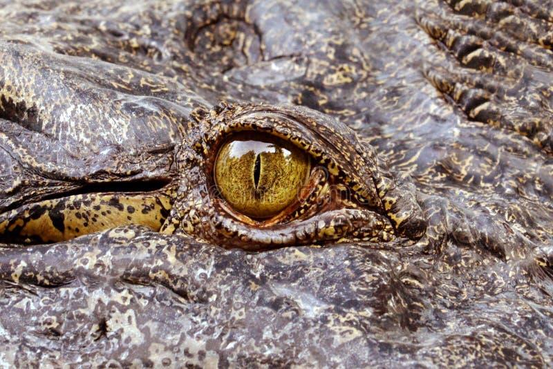 Oog van de krokodil royalty-vrije stock fotografie