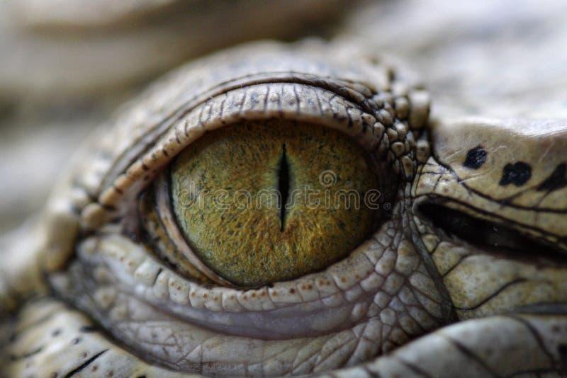 Oog van de Krokodil stock afbeelding