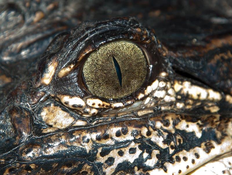 Oog van een alligator royalty-vrije stock afbeeldingen