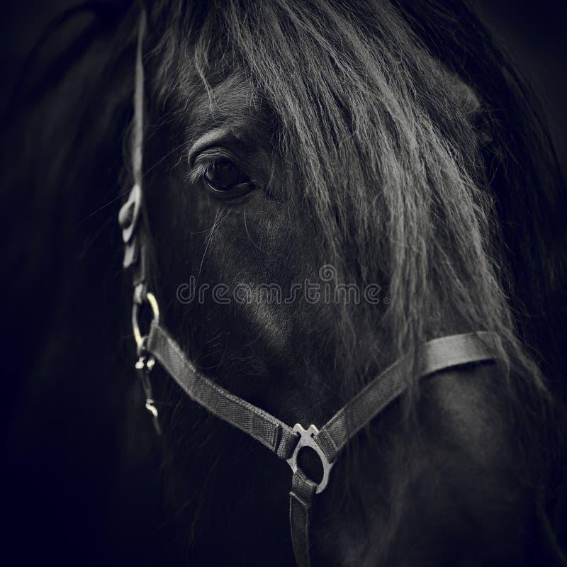 Oog van een paard royalty-vrije stock foto's