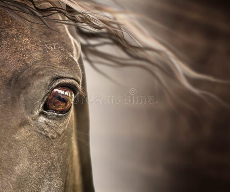 Oog van paard met manen op donkere achtergrond royalty-vrije stock foto's