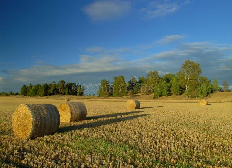 Oogst in Zweden royalty-vrije stock afbeeldingen