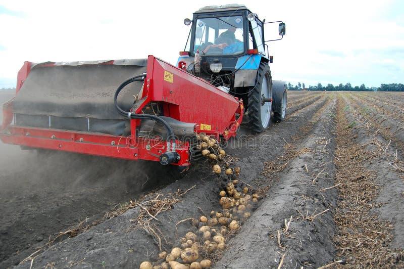 Oogstende aardappel stock afbeeldingen