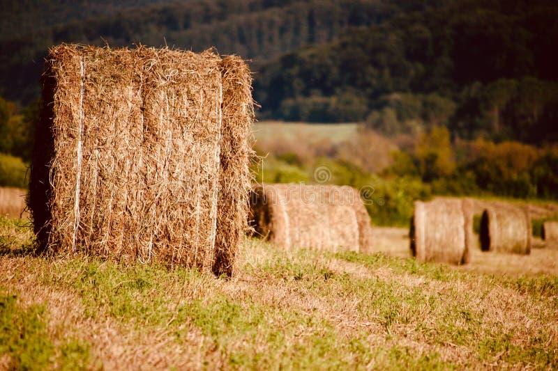 Oogstlandschap met ballen van stro in Transsylvanië royalty-vrije stock fotografie