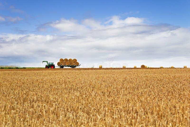 Oogsttijd op het landbouwbedrijf stock foto's