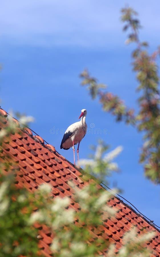 Ooievaar die zich op een dak bevinden royalty-vrije stock foto's