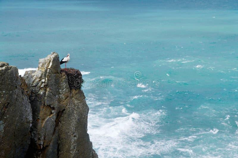 Ooievaar op nest over oceaanklip royalty-vrije stock afbeeldingen