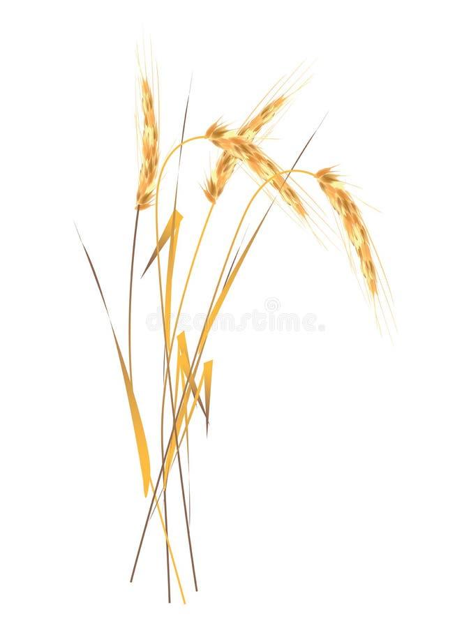 Oor van de tarwe stock illustratie