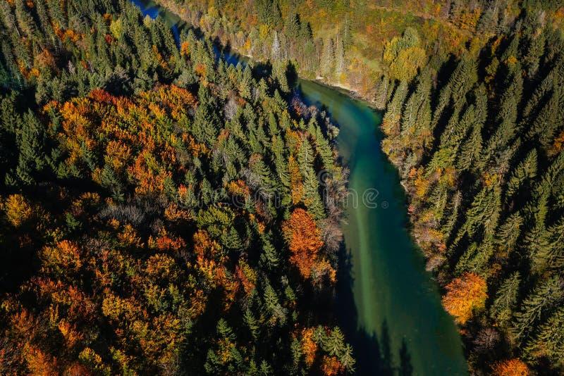 Oorspronkelijke alpiene rivier die door bebost landschap kronkelen stock fotografie