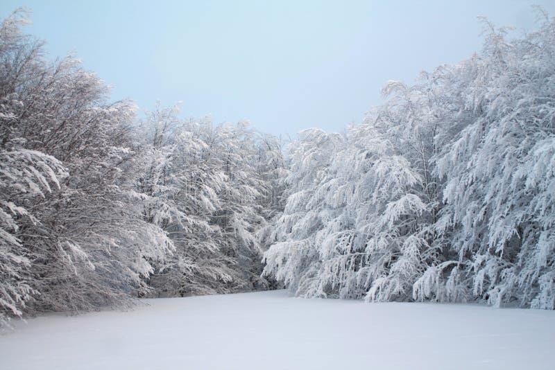 Oorspronkelijke sneeuw dichtbij een sneeuwbos op de heuvels royalty-vrije stock afbeelding